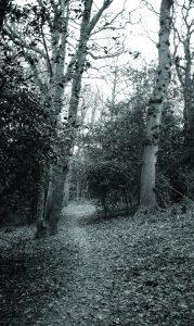 Glory woods dorking, surrey