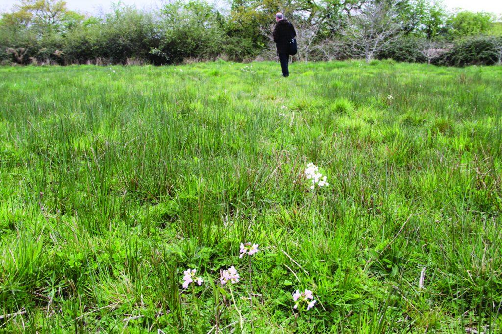 Remembered fields the lamby newport with professor Owain Jones